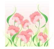 Roze anjers Royalty-vrije Stock Afbeeldingen