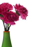 Roze anjers in groene vaas Royalty-vrije Stock Afbeeldingen
