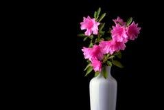 Roze azalea's in een witte vaas Stock Foto's