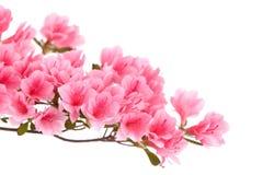 Roze azaleabloemen