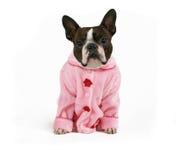 Roze baby Stock Fotografie