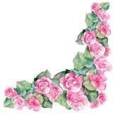 Roze begoniabloem, waterverf, hoek Royalty-vrije Stock Fotografie