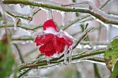 Roze bevroor in ijs en sneeuw royalty-vrije stock afbeeldingen