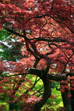 Roze Bladeren Royalty-vrije Stock Fotografie