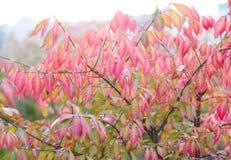 Roze bladeren Royalty-vrije Stock Foto