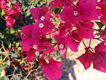 Roze bladeren en kleine flovers Royalty-vrije Stock Foto's