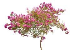 Royalty-vrije stock foto: bloeiende boom in de lente die op wit wordt