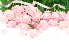 Roze bloeiende rozen Stock Foto
