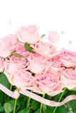 Roze bloeiende rozen Stock Afbeeldingen