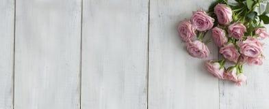 Roze bloeiende rozen royalty-vrije stock afbeeldingen