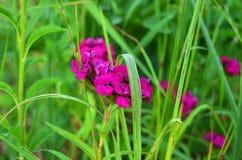 Roze bloeiwijze in struikgewas royalty-vrije stock fotografie