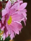 Roze bloem Royalty-vrije Stock Foto's