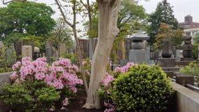 Roze bloem die die rond Yanaka-begraafplaats in de de herfstochtend bij Nippori-Post bloeien tegen April 2018 wordt genomen royalty-vrije stock afbeeldingen