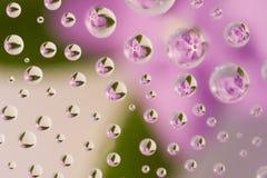 Roze bloem die in waterdrops wordt weerspiegeld Royalty-vrije Stock Afbeeldingen