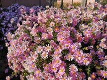 Roze bloem in een struik royalty-vrije stock foto's