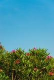 Roze bloem en blauwe hemel Royalty-vrije Stock Afbeelding
