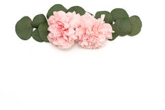 Roze bloem en eucalyptusbanner Bloemen op witte achtergrond Royalty-vrije Stock Foto