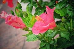 Roze bloem en groene bladeren Stock Foto