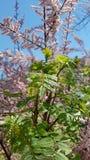Roze bloem en groene spruit Royalty-vrije Stock Foto's