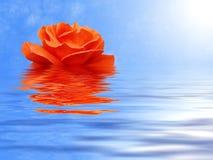 Roze-bloem en water Stock Afbeeldingen