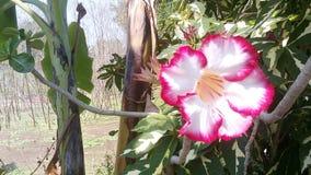 - roze bloem - groene bladeren Stock Foto