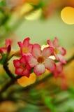 - roze bloem - groene bladeren Stock Afbeelding