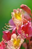 Roze Bloem in het bos stock afbeelding