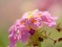 Roze bloem met een verwarde achtergrond royalty-vrije stock afbeeldingen