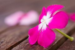 Roze bloem met waterdaling in stamper stock foto's