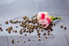 Roze bloem met waterdalingen over donkerblauwe achtergrond Stock Afbeeldingen