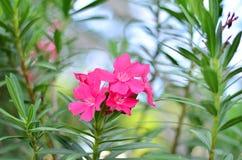 Roze bloem op drie Stock Fotografie