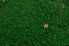 Roze bloem op gras Royalty-vrije Stock Afbeeldingen