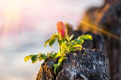 Roze bloem op het strand Stock Foto's