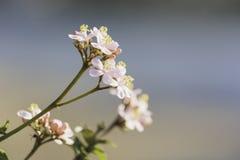 Roze bloem op vage ruimte als achtergrond en exemplaar voor tussenvoegsel uw tekst royalty-vrije stock foto's