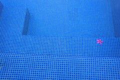 Roze bloem in zwembad Stock Fotografie