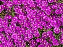 Roze bloemachtergrond Royalty-vrije Stock Afbeelding