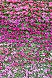 Roze bloemachtergrond. stock foto's