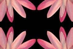 Roze bloemblaadjegrens Royalty-vrije Stock Afbeeldingen