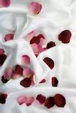Roze-bloemblaadjes Stock Foto