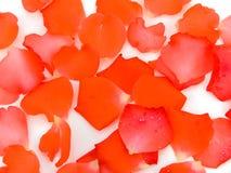 Roze-bloemblaadjes Royalty-vrije Stock Afbeelding