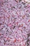 Roze bloemblaadjes Stock Afbeeldingen
