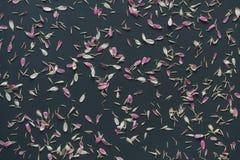 Roze bloemblaadjes op donkere achtergrond Stock Afbeelding