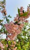 Roze bloembladeren Royalty-vrije Stock Fotografie