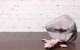 Roze bloembloesems in glasvaas met duidelijk water Royalty-vrije Stock Fotografie