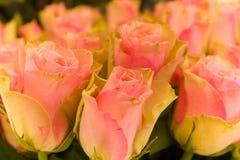 Roze bloemen Royalty-vrije Stock Foto's