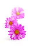 Roze bloemen stock afbeeldingen