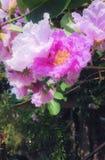 Roze bloemen Royalty-vrije Stock Afbeeldingen