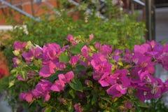 Roze bloemen stock foto's