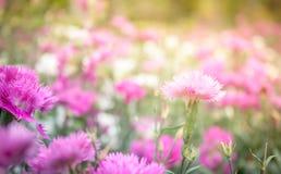 Roze bloemen als achtergrond Stock Foto's