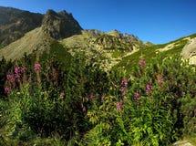 Roze bloemen in bergen Royalty-vrije Stock Afbeelding